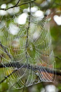 Preview wallpaper cobweb, drops, branches, macro