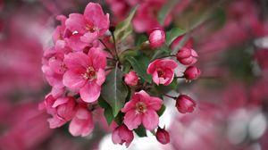 Preview wallpaper color, pink, petals, plant