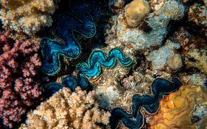 Preview wallpaper corals, algae, underwater world, plants