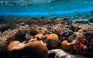 Preview wallpaper corals, algae, underwater world, water
