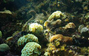 Preview wallpaper corals, algae, water, underwater world