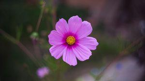 Preview wallpaper cosmos, flower, purple, macro