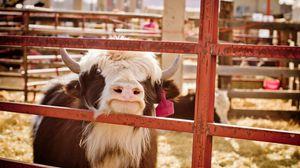 Preview wallpaper cow, background, farm