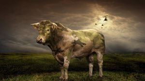 Preview wallpaper cow, grass, light, field