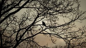 Preview wallpaper crow, bird, branches, bw