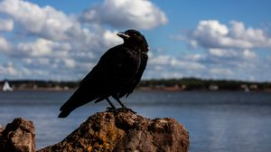 Preview wallpaper crow, bird, rocks, sky