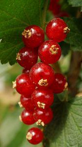 Preview wallpaper currant, berries, leaves, red, macro