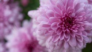 Preview wallpaper dahlia, flower, petals, drops, pink