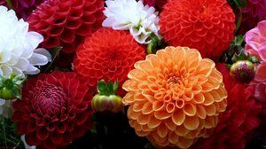Preview wallpaper dahlias, flowers, bouquet, close-up