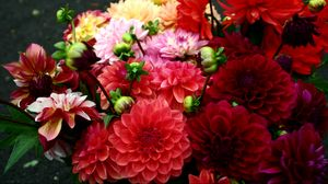 Preview wallpaper dahlias, red, bright, different, bouquet