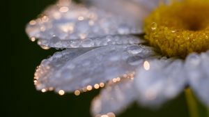 Preview wallpaper daisy, flower, drops, close-up