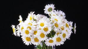 Preview wallpaper daisy, flowers, bouquet, vase, black background