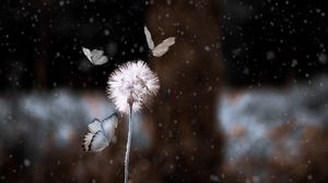 Preview wallpaper dandelion, butterflies, photoshop, blur, flower, insect