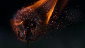 Preview wallpaper dandelion, fire, sparks