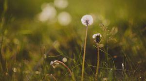 Preview wallpaper dandelion, flower, grass, macro