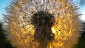 Preview wallpaper dandelion, grass, light, shadow, down