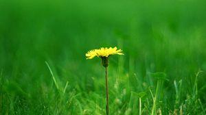 Preview wallpaper dandelion, meadow, grass, blurring, summer