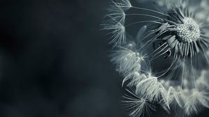 Preview wallpaper dandelion, plant, flower, seeds, feathers