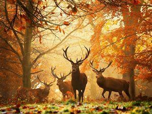 Preview wallpaper deer, grass, leaves, autumn, trees