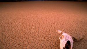 Preview wallpaper desert, drought, skull, bone, head