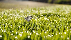 Preview wallpaper dew, grass, butterfly, insect, sunlight