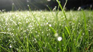 Preview wallpaper dew, grass, drops, green, summer, morning