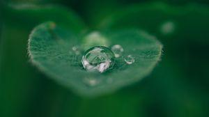 Preview wallpaper dew, leaf, drop, closeup
