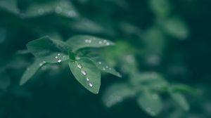 Preview wallpaper dew, leaf, drops