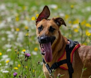 Preview wallpaper dog, animal, protruding tongue, pet, joy