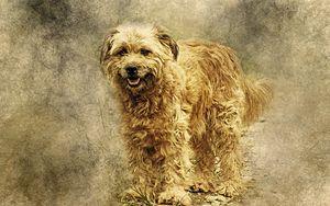 Preview wallpaper dog, art, fluffy
