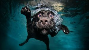 Preview wallpaper dog, black, underwater, swimming, water
