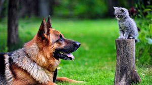 Preview wallpaper dog, cat, grass, german shepherd