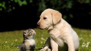 Preview wallpaper dog, cat, kitten, puppy, grass