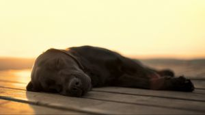 Preview wallpaper dog, dream, face, black