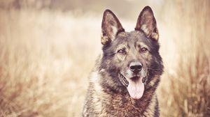 Preview wallpaper dog, face, grass, blurring
