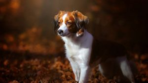 Preview wallpaper dog, foliage, autumn, puppy