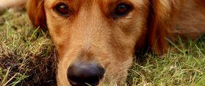 Preview wallpaper dog, glance, animal, pet