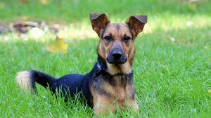 Preview wallpaper dog, grass, green, spring, friend, loyalty