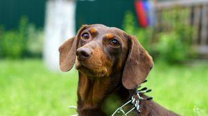 Preview wallpaper dog, grass, summer, view, loyalty, friend