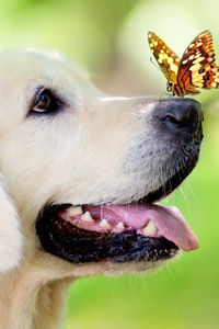 Preview wallpaper dog, muzzle, butterfly, protruding tongue, spring, summer