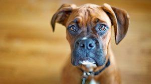 Preview wallpaper dog, muzzle, eyes, big