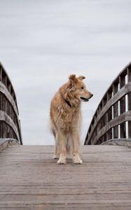 Preview wallpaper dog, pet, animal, bridge, tree