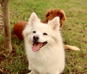 Preview wallpaper dog, pet, furry, white