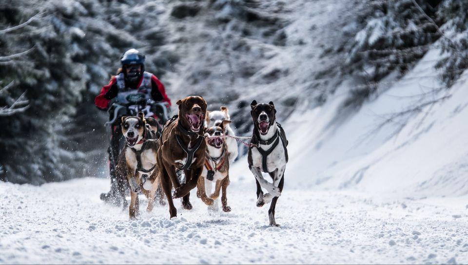 960x544 Wallpaper dog, racing, snow sports