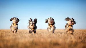 Preview wallpaper dog, run, grass, wind