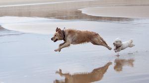 Preview wallpaper dog, run, jump, water