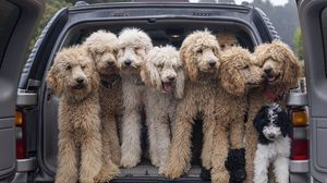 Preview wallpaper dogs, animals, pets, fluffy, car