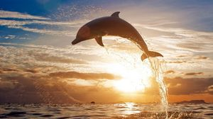 Preview wallpaper dolphin, jump, sea, sunset