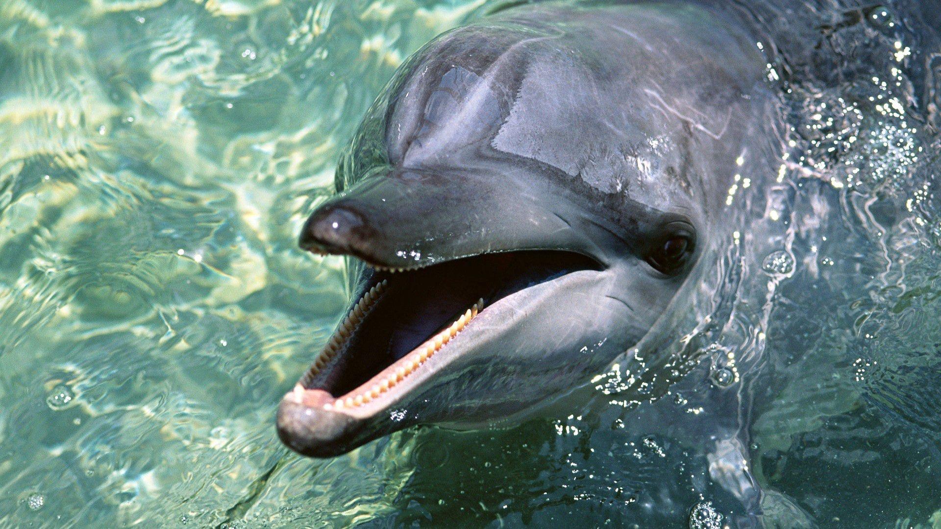 1920x1080 Wallpaper dolphin, teeth, water