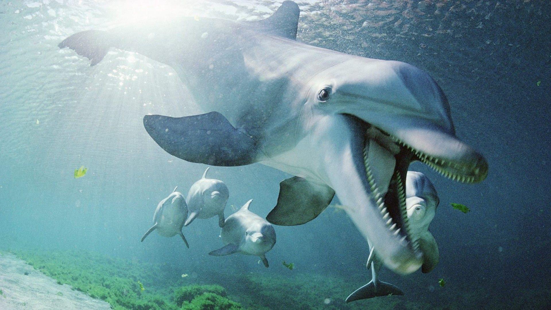 1920x1080 Wallpaper dolphin, underwater, swimming, sea